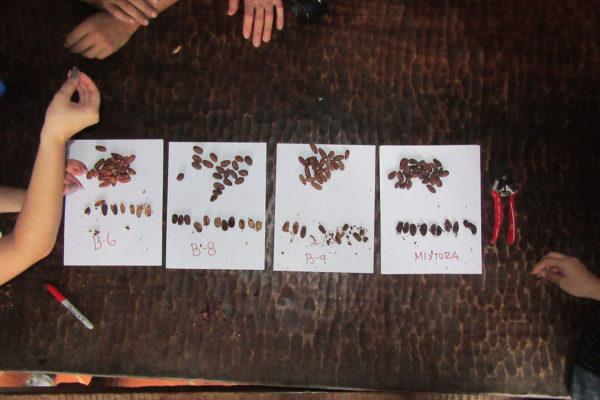 antioquia-cacao-apoyo-sectores1