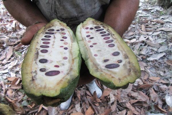 antioquia-cacao-apoyo-sectores4