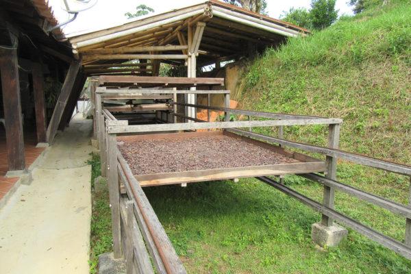 antioquia-cacao-apoyo-sectores8