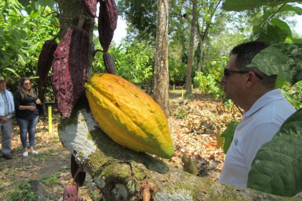 arauca-cacao-apoyo-sectores14