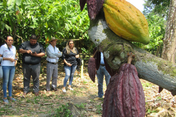arauca-cacao-apoyo-sectores6