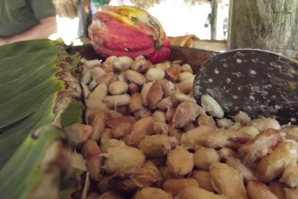 bolivar-cacao-apoyo-sectores-7