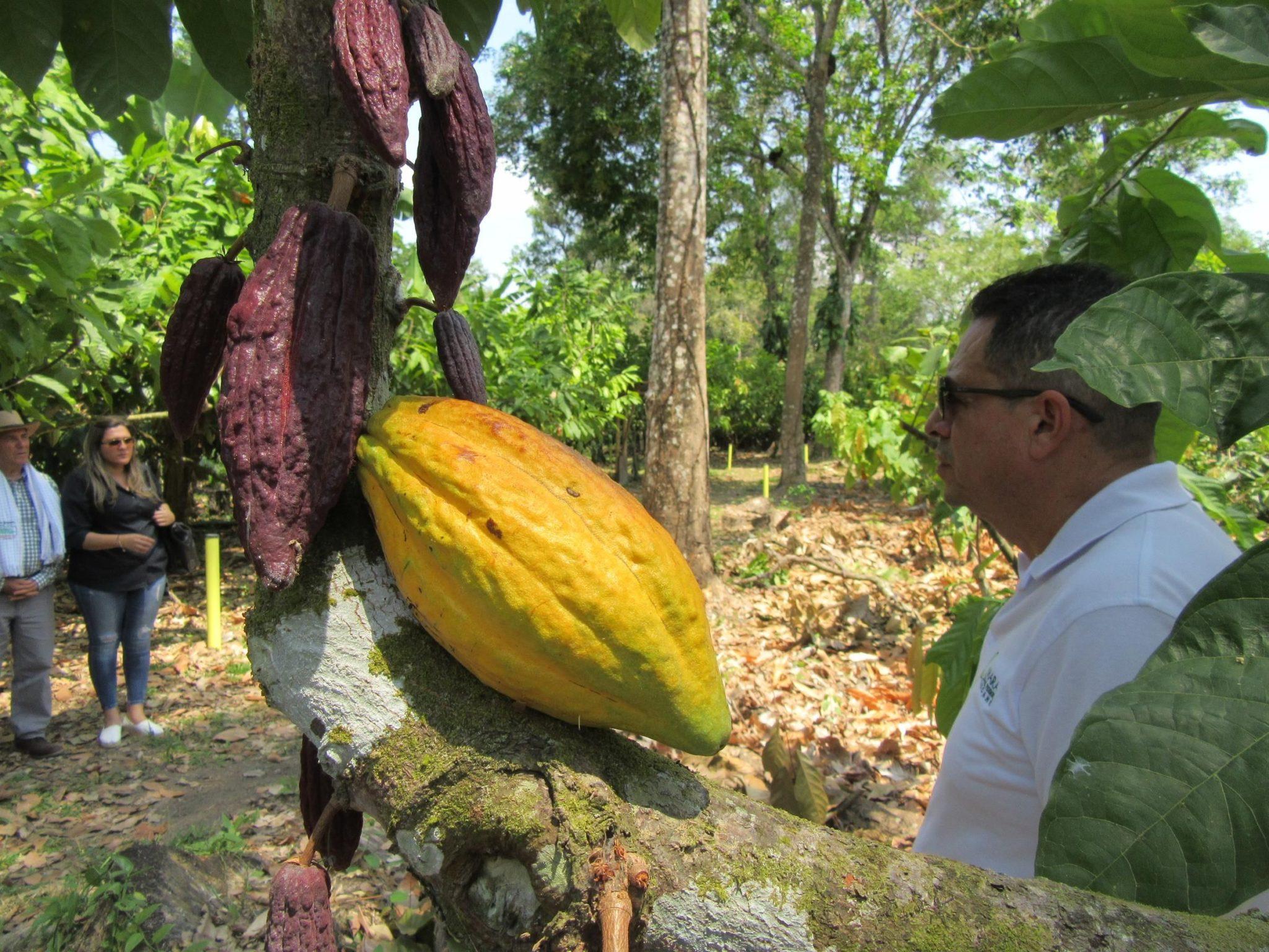 Desde Arauca para el resto del mundo: Cacao de exportación