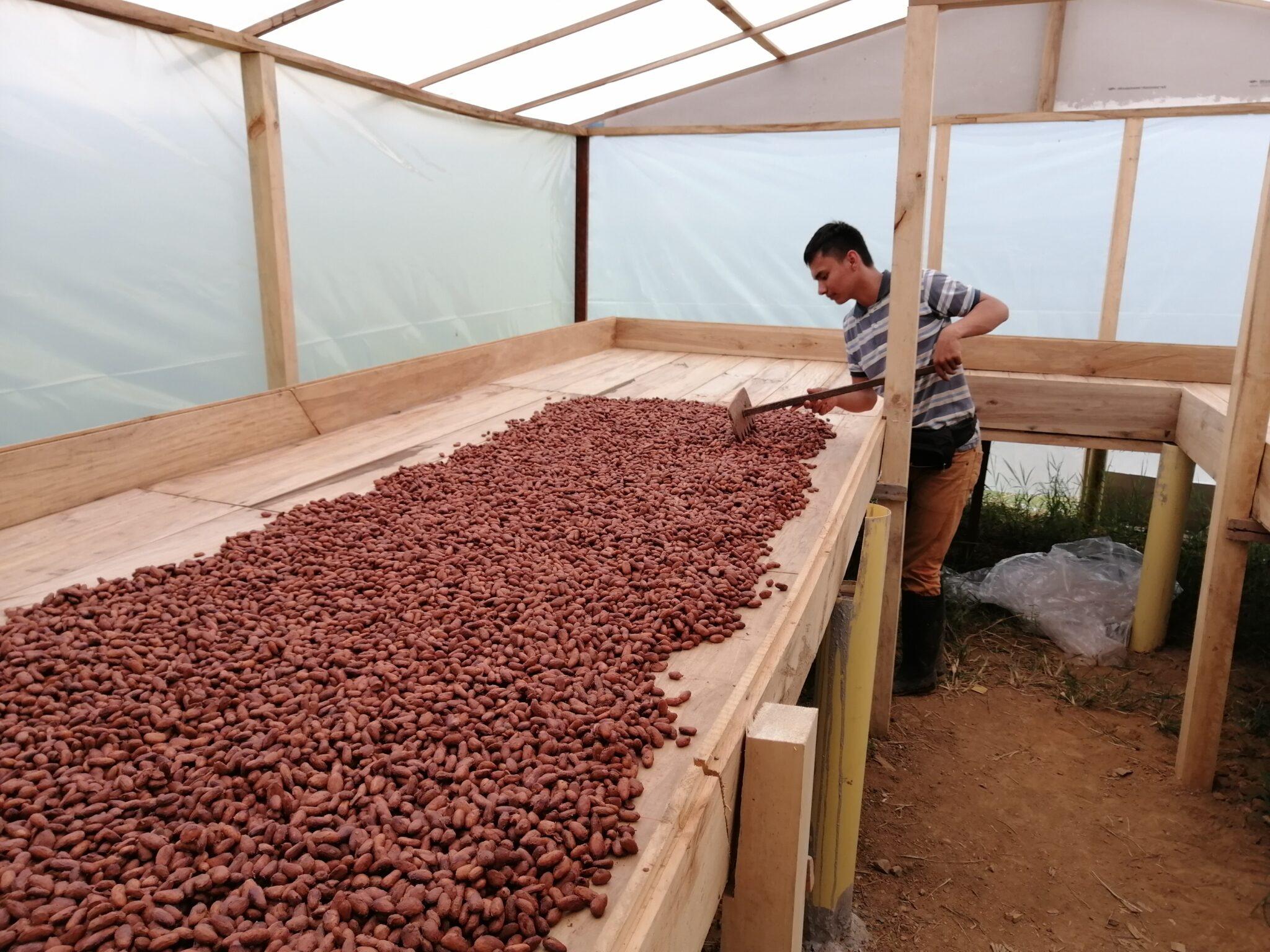 El salto tecnológico del cacao en el Tolima